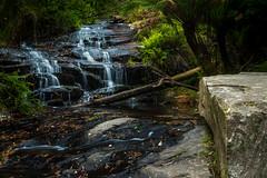 300A0843.jpg (Marty Friedel) Tags: longexposure water landscape waterfall bush rainforest rocks au australia victoria lee bushwalk lorne otwaynationalpark littlestopper