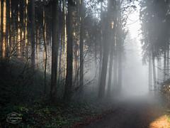 SPLINSON's Pixelwurst (spline_splinson) Tags: morning sunlight tree forest schweiz switzerland nebel zrich sonne wald bume baum ch swissalps morgensonne waldweg horgen horgenberg