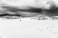 Dunas da Lagoa (marcoscampos) Tags: floripa bw praia sc brasil areia natureza florianpolis chuva pb cu contraste nuvens santacatarina dunas sandboard marcoscampos
