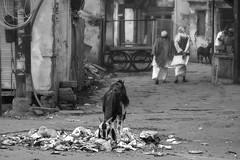 Varanasi-20151205-0629-_35A0808-Edit (Swaranjeet) Tags: varanasi banaras kashi cityoftemples ghats burningghats pandas pundits temples kashivishwanath dashashwamedhghat assighat harishandra ghatfilthpovertyholi men cremations pyres crowded crowds sjs swaran swaranjeet swaranjeetsingh sjsvision sjsphotography swaranjeetphotography 2015 india hindustan bharatvarsh indie cremation ganges ganga people life portraits holy holycity up uttarpradesh canoneos7dmarkii candid singh photographer thane mumbai indian