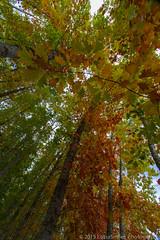 IMG_5388.jpg (LotsaSmiles Photography) Tags: autumn friends people fall oregon portland meetup scenic hike winery abiqua