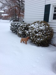 biscuits-loves-the-snow_16431980317_o