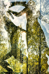 Memorial (pni) Tags: civilwar memorial whites statue sculpture 1918 multiexposure multipleexposure tripleexposure vilppula filpula mntt finland suomi pekkanikrus skrubu pni