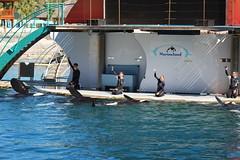IMG_6862 (Bebelouga) Tags: orque marineland killerwhale orca