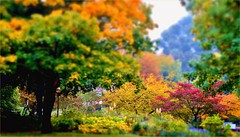 Bright October (farmspeedracer) Tags: nature autumn fall park scenery red green tree foliage color leaf leaves