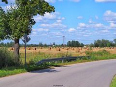 Round bale of straw on the field (darkadi1) Tags: olympus mzuiko m45mm pen epl6 baloty bale soma straw pole field kozienice mazowieckie poland polska europa europe