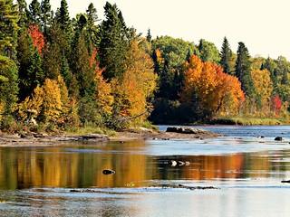 Nipisiquit River Reflections