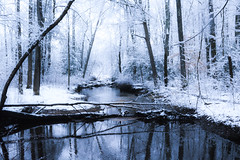 Stream in Winter by Addison Likins (AccessDNR) Tags: 2016 photocontest winter sceniclandscape scenery cedarville stateforest stream snow