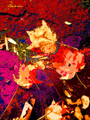 Dead Leaves (Stephenie DeKouadio) Tags: canon outdoor rockcreekpark art artistic dc color colour colorful autumn abstract abstractart leaf leaves red painting