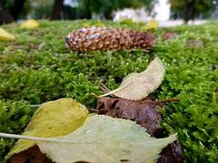 Herbst auf der Mauer (dorisgoebel) Tags: autumn herbst moos moss bltter foliage natur