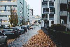 299/366 (Niko Saarinen) Tags: helsinki helsinkistreet autumn fall syksy syys fujifilm xe2 fujinon35mm classicchrome rnt