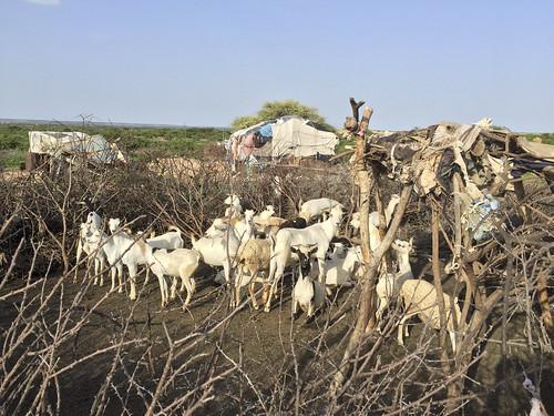 Near Hargeisa, Somaliland