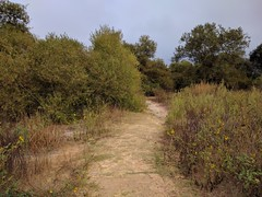 Pathway (Kelson) Tags: madronamarsh california hike marsh torrance nature southbay plants trees