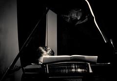 The Pianist (Tribut to Francois Truffaut) (macplatti) Tags: koblach vorarlberg austria aut piano pianoman pianist monochrome alienskin wetplate collodium music flgel sw bw blackandwhite schwarzweiss fujixt10 fujixf1855mm truffaut aznavour