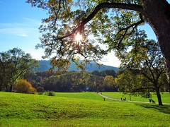 Herbst - Autumn (karoo79) Tags: herbst bltter nature bern schweiz autumn sonnenschein schner herbsttag
