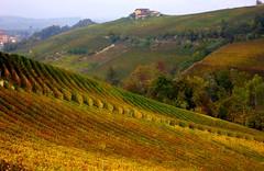 Vineyards of Barolo (annalisabianchetti) Tags: vineyards barolo vigneti autumn autunno rural piemonte langhe italy