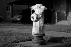 Sony 2193 Hydrant (reed.john51) Tags: blackandwhite monochrome sony sonya7ii leica leica75mmsummaritf25 suburb hydrant morning