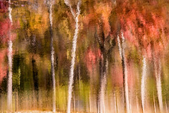 Artistic Tree Reflection 3-0 F LR 11-1-16 J012 (sunspotimages) Tags: fall tree trees nature landscape artwork artistic digitalmanipulation misc forest