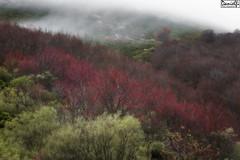 United Colors of Winter (danielfi) Tags: asturias asturies bosque paisaje landscape invierno winter ngc forest