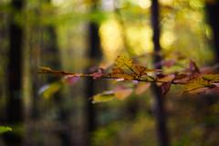 DSC00686 (gabriella.lavati) Tags: sony a6000 schneider kreuznach xenon edixareflexversion m42 50mmf19 manualfocus manual mflens nature spring color forest wood leaves bokeh bokehdream