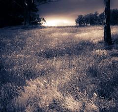New Light of Tomorrow (ambientlight) Tags: ambientlight magic light new tomorrow