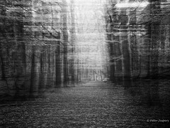 In the middle of the journey of my life, I found myself astray in a dark wood (Peter Jaspers (less time to comment)) Tags: frompeterj 2016 olympus zuiko omd em10 1240mm28 bw zwartwit blackwhite blackandwhite trees forest icm zoomland brabant brabantsewal bn movement intentionalcameramovement mysterious lost bos wood astray dwaalspoor autumn fall hike landscape monochrome brabantslandschap hss sliderssunday abstract
