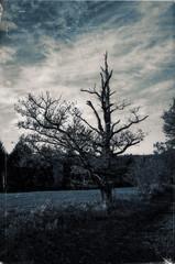 R0000076_DxOb (pechenet-olivier) Tags: ricoh gr2 dxo arbre mort foudre campagne lannemezan france hautepyrnes 65