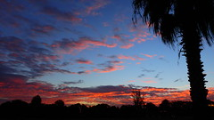 Sunrise November 9, 2016 (Jim Mullhaupt) Tags: sunrise sunup dawn sun morning sky clouds color red orange pink yellow blue tree palm silhouette weather tropical exotic wallpaper landscape bradenton florida manateecounty nikon coolpix p900 jimmullhaupt photo flickr geographic picture pictures camera snapshot photography nikoncoolpixp900 nikonp900 coolpixp900