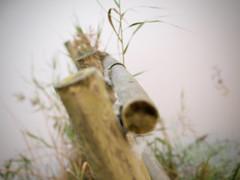 Broken Fances (jocsdellum) Tags: valla tanca fance softfocus herba hierba grass plantas otoo autumn tardor despusdelalluvia desprsdelapluja afterrain