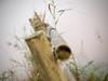 Broken Fances (jocsdellum) Tags: valla tanca fance softfocus herba hierba grass plantas otoño autumn tardor despuésdelalluvia desprésdelapluja afterrain