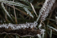 Frosty morning (Infomastern) Tags: cold frost kallt macro makro natur nature ruby3
