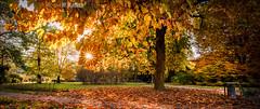 golden light in the park (W.MAURER foto) Tags: cello autumn herbst herbststimmung herbstfarben goldenerherbst bltter park leuchten gelb orange bume baum spaziergang entspannung atmosphere atmosphre relax automne autunno hofgarten innsbruck nikond800 nikon tamron1530mmf28 tamron