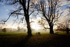 Late Autumn (Ben Pugh) Tags: velvia fujifilm trees yorkshire winter beningbroughhall york xpro2