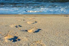 Footprints (Kristina Leszczak) Tags: outside beach fall autumn shallowdepth depthoffield nj newjersey jerseyshore eastcoast pointpleasant ocean water footprints steps foot shadows nikon nikond3200