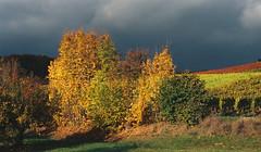 Nachtrag (alf sigaro) Tags: kodakadvantix4100ix kodakadvantix kodak advantix4100ix aps herbst badenwrttemberg weinberg weinberge vineyard vineyards