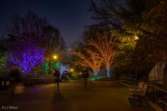 20161201 Brew Lights at the Zoo-3603 (Lora J Photography) Tags: zoolights fonz brewlights nationalzoo