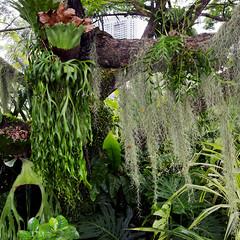 urban jungle (diatoscope) Tags: city tree nikon jungle malaysia kualalumpur d7000