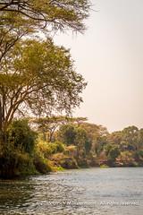 The banks of the Zambezi River, Lower Zambezi National Park, Zambia (Ulrich Mnstermann) Tags: africa travel holiday river landscape vakantie safari afrika riverbank landschaft za ferien zambia reise landschap reizen rivier zm zambeziriver flus lowerzambezinationalpark lusakaprovince 150900zambia