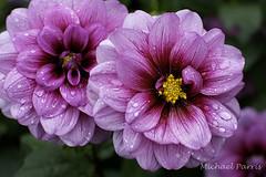 Flower 6 (Pagnobito) Tags: flower up gardens 35mm prime sissinghurst nikon close national trust d7100