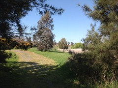 I met  young chap lurking in the shade here reading the news from the war in Syria and his fatherland, Lebanon (spelio) Tags: grass creek walking landscapes walk oct australia canberra stroll act riparian ngunnawal roaming casuarinas australiancapitalterritory 2015 2913 ginninderracreek