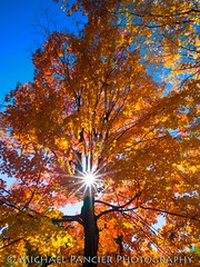 Fall in Central Park (Michael Pancier Photography) Tags: newyorkcity autumn newyork fall us unitedstates centralpark manhattan bigapple starburst uppereastside travelphotography commercialphotography naturephotographer editorialphotography michaelpancierphotography landscapephotographer fineartphotographer michaelapancier wwwmichaelpancierphotographycom