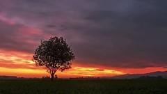 Burning Sky (Erich Hochstöger) Tags: sky tree clouds sunrise landscape lumix austria österreich himmel wolken panasonic landschaft sonnenaufgang baum niederösterreich morgenrot loweraustria morgenstimmung morningmood fz150