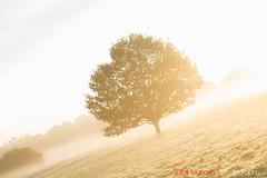 Hatfield_Forest-27 (Eldorino) Tags: park uk morning autumn trees nature forest sunrise landscape countryside nikon britain centre jour hatfield bishops stortford essex hertfordshire stanstead hatfieldforest