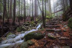 Sunday Morning Adventures (oh_my_gerbils) Tags: longexposure canada water leaves fog vancouver creek britishcolumbia slowshutter yvr vancity hellobc vancitybuzz lazyshutters veryvancouver enjoyvancouver