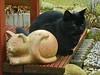 IMGP0676 (d_fust) Tags: cat kitten gato katze 猫 macska gatto fust kedi 貓 anak katt gatito kissa kätzchen gattino kucing 小貓 고양이 katje кот γάτα γατάκι แมว yavrusu 仔猫 का बिल्ली बच्चा