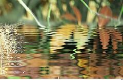 Ballade  Malijai, Novembre 2015 (32) (Sebmanstar) Tags: travel france flower color macro fleur plante french photography photo image pentax creative explore creation research imagine imagination provence paysage campagne couleur ballade creatif fleure malijai
