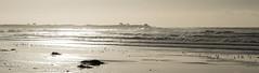 Liquid Metal Days (nosha) Tags: ocean california sea usa seascape beautiful beauty metal pacific shore pacificgrove liquid nosha liquidmetaldays