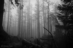 Holy, creepy night (Thomas Frejek) Tags: de deutschland brocken wald harz wernigerode 2015 sachsenanhalt blocksberg