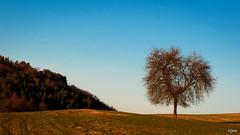 151226 - THOIRETTE (ri.gando) Tags: paysages d90 rigando