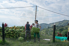 Colombian Vertigo 2015- www.wmaisy.com -26 aout 2015 -260.jpg (Wilfried Maisy Photojournaliste) Tags: photography photojournalism co antioquia colombie photojournalisme salamina photographiehumaniste photographiedocumentaire